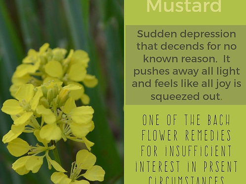 MUSTARD-Bach Flower Remedy