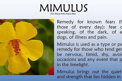 MIMULUS-Bach Flower Remedy