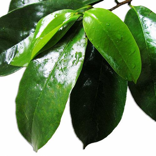 Raw Graviola Leaf Powder Organic