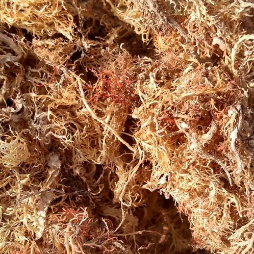 Raw-Jamaican Gold Sea Moss  RICH IN ZINC-CALCIUM