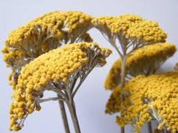 Yarrow Flowers-Organic Cut & Sifted