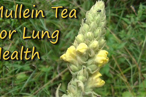 Mullein Tea Blend ~ Body Tonic