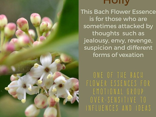 HOLLY-Bach Flower Remedy