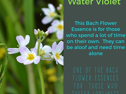 BACH FLOWER WATER VIOLET (Hottonia palustris)