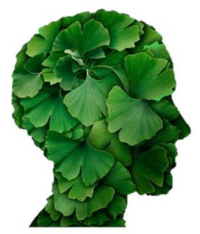 Memory & Cognition with LOVE.... From the GINKGO TREE