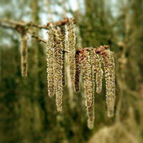 ASPEN-Bach Flower Remedy