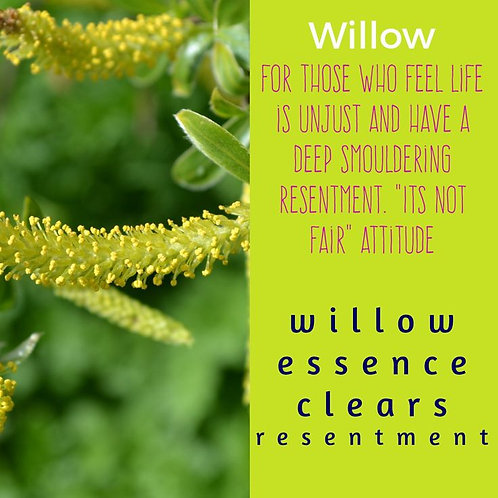WILLOW-Bach Flower Remedy