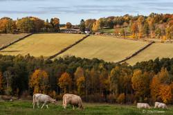 Liarumsdalen på hösten, Liarum