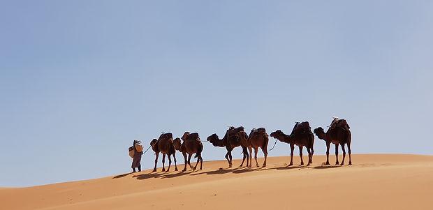 camelus-3199693_1920.jpg