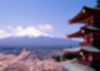 cherry_blossoms_and_Mount_Fuji-Landscape