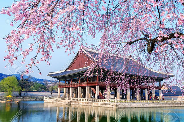 96883906-gyeongbokgung-palace-with-cherr
