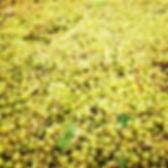 castelli_fruits.jpg