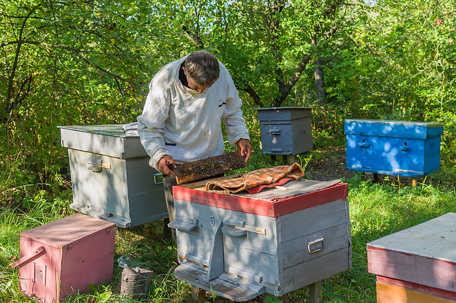 Ukrainian bee-keeper at work.jpg
