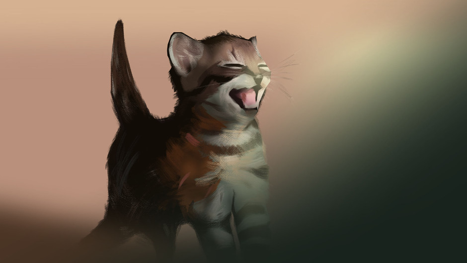 Lighting and colour study of a cat