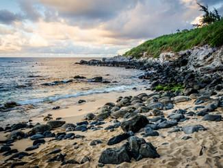 Sea Turtles at Ho'okipa Beach