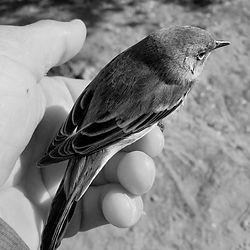 BirdInHand.jpg