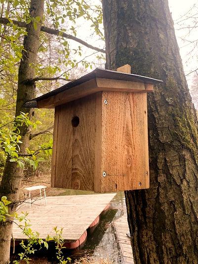 Vogelhaus%20Meisen%2C%20Sperlinge%20(3)_