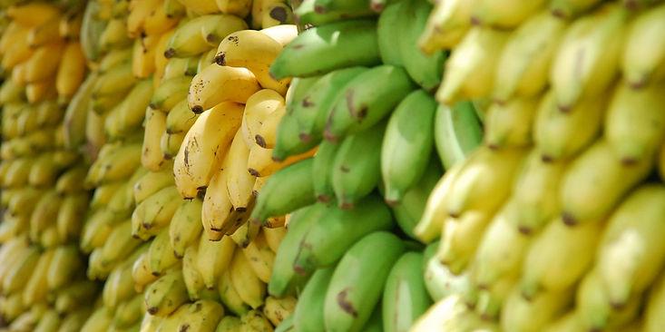 Fotos-Serviciosbanano2.jpg
