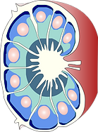 Immunoengineering.tif