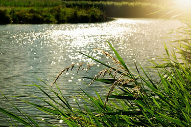 bright-daylight-environment-133682 (1280