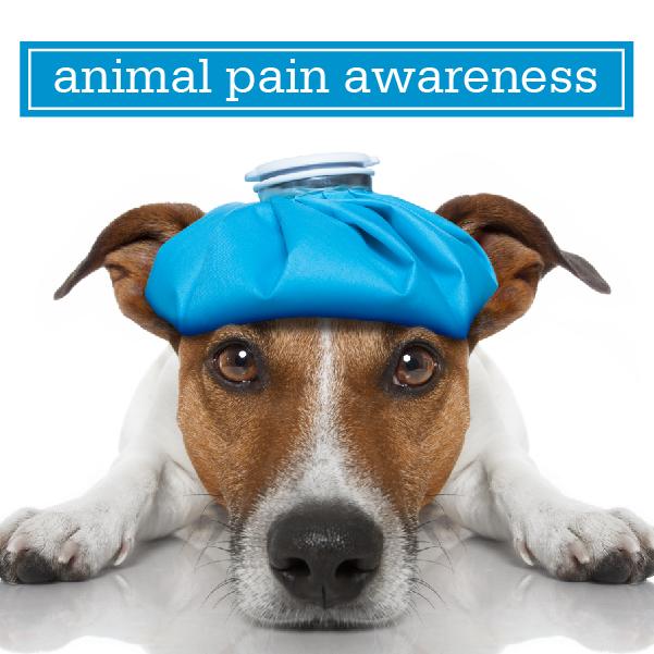 09-16-19_Animal-Pain-Awareness