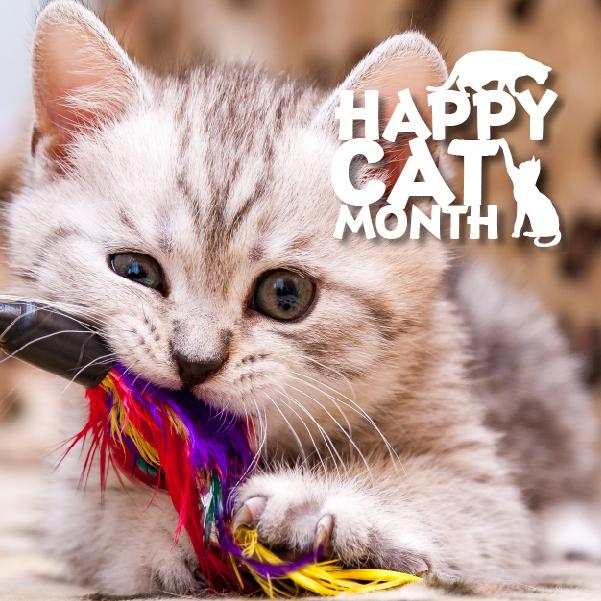 09-18-19_Happy-Cat-Month_Post2_Instagram