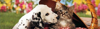 dalmatian-dog-and-cute-little-kitten-web