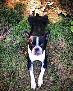 sweet pea dog pic.jpg