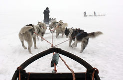 SvalbardMushing2.jpg