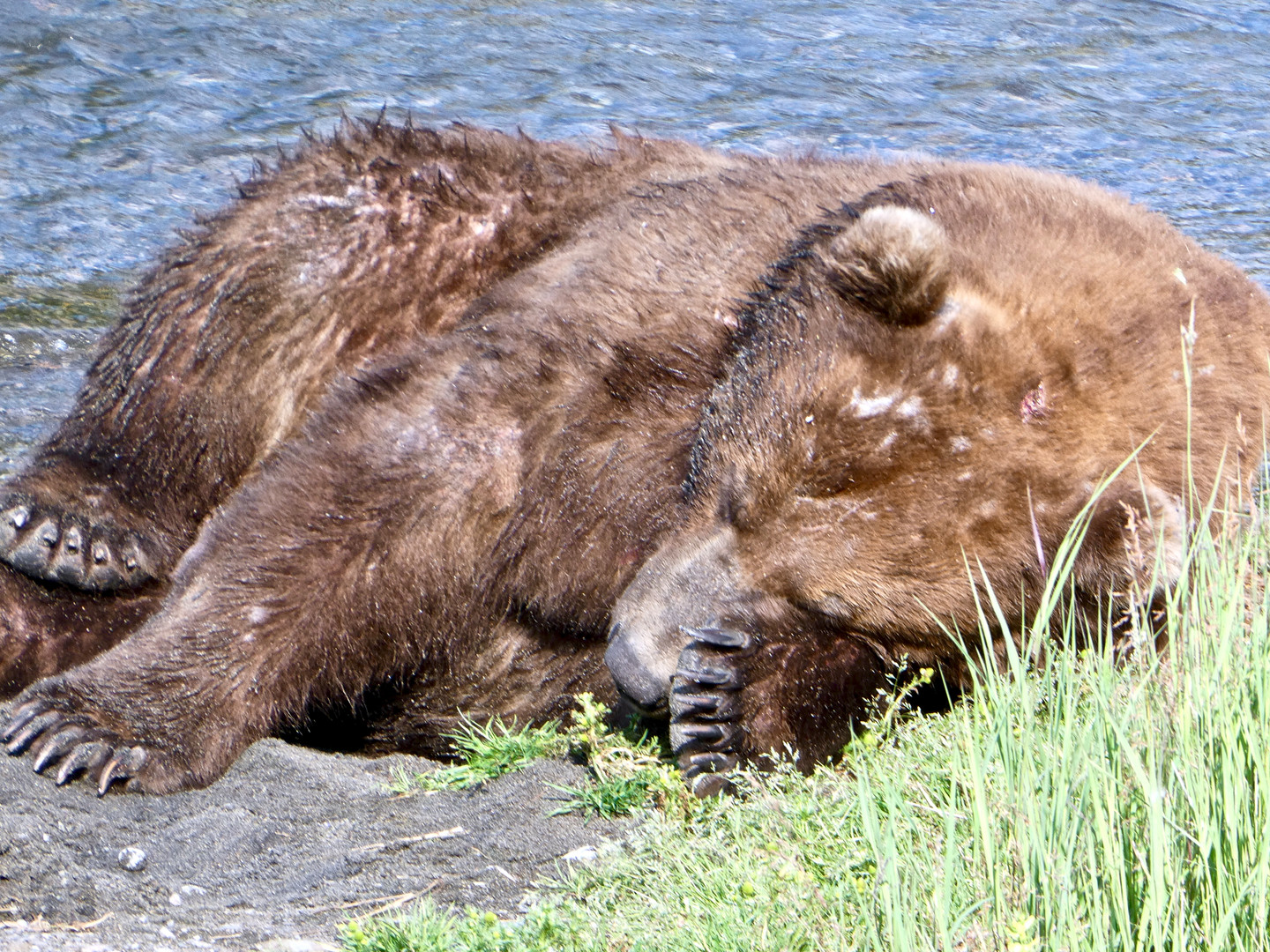 747 exhausted from fishing NPS Photo: N.