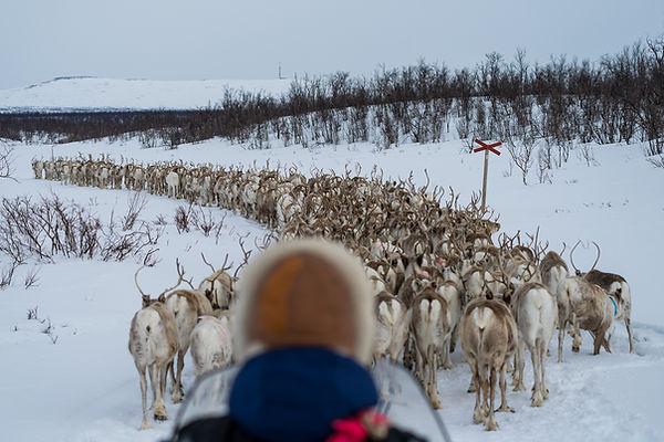 Lars Johan with reindeer.jpg