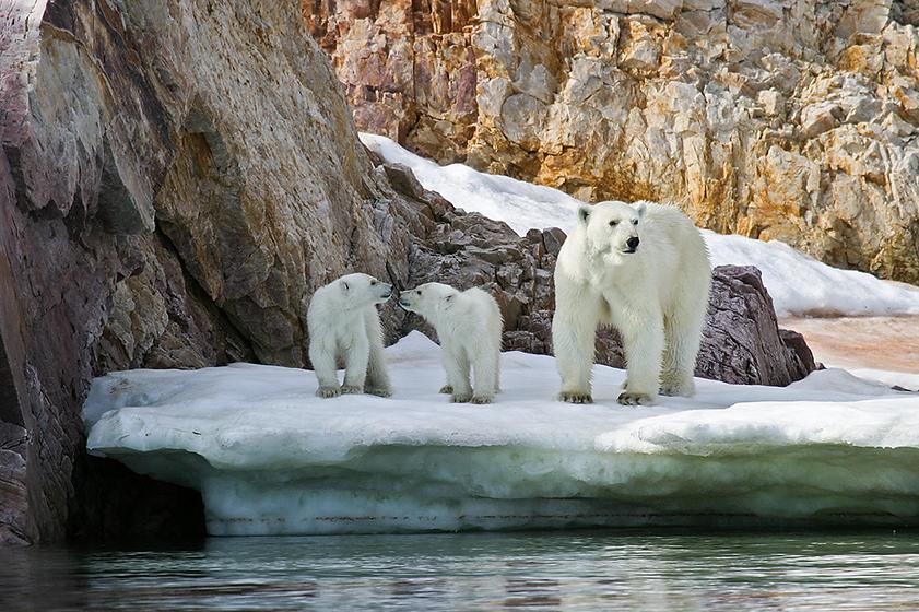 Polar Bears 1.png
