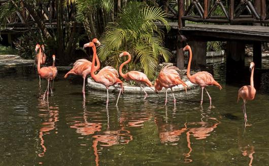 Lago e Flamingos