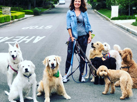 Pack Dog Walks Are A Booming Business, But Is It The Right Choice For Your Dog?