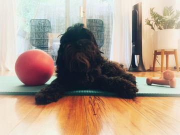 Is Your Dog Buzz-Killing Your At-Home Workout?