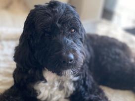 Help! My Dog Is Ruining My Love Life!