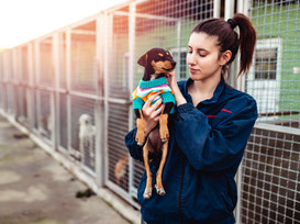 A Few Ways To Support Animal Shelters In Need