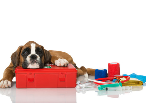 Everything You Need For Your Dog's First Aid