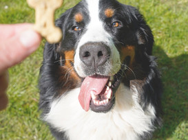Treat Training Tips For Dogs That Go Bonkers