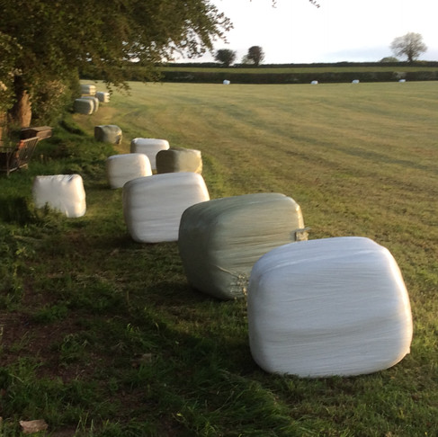 First of the hay and haylage have been made.
