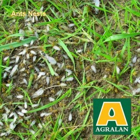 Ant Nest Control  by Steinernema  a  natural biological   product