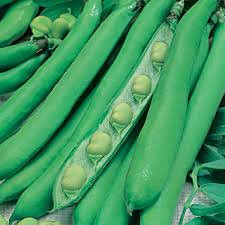 500g Broad Beans Masterpiece  Green Longpod seeds
