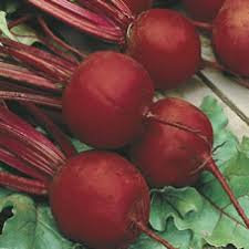 Beetroot Boltardy seeds growers pk one of the best known popular varieties