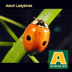 Aphid Control with Adult Ladybirds controls Greenfly and Blackfly