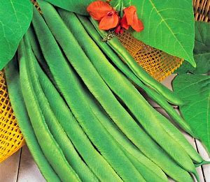 Scarlet Emperor 500g Runner Bean seeds grower pk