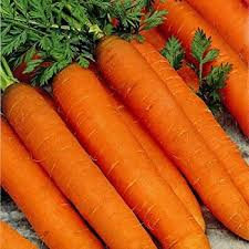 Carrot Autumn King 2 Carrot seeds best maincrop around heavy cropper