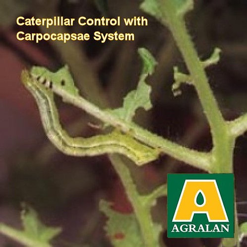 Caterpillar Control  by a  natural biological   product