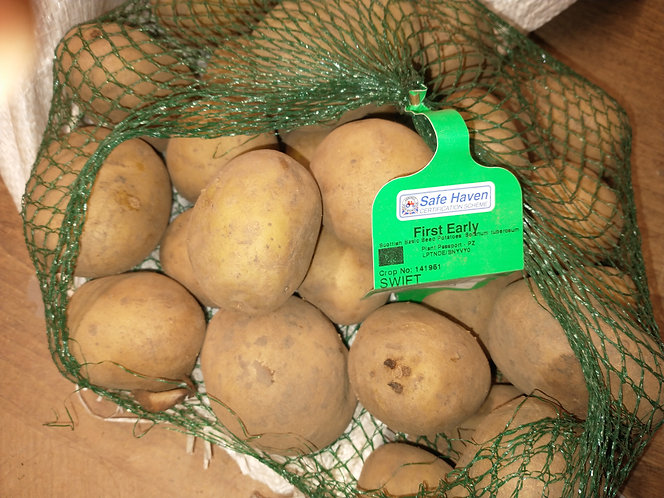 Swift seed potato first early