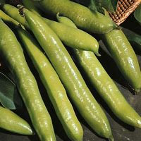 Broad Bean 500g Imperial Green Longpod  popular variety