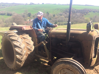 1959 Massey 35 tractor